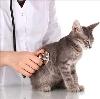 Ветеринарные клиники в Сосково